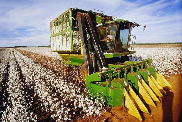 棉花收割机